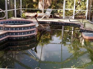 Pool Cleaning Port Charlotte FL